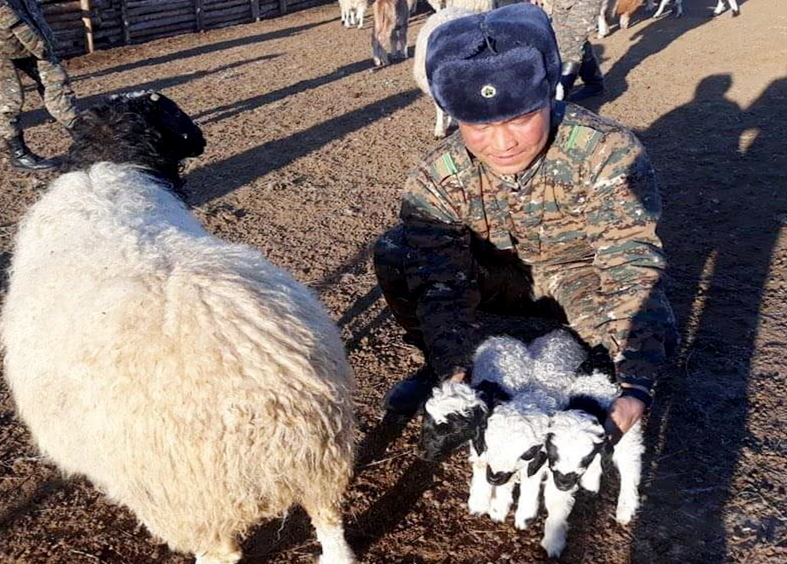 Хилчний хотонд гурван ихэр хурга мэндэлжээ